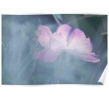 Whispering Wild Rose Poster