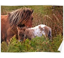 Beautiful Foal Poster