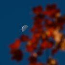 Focused on the Autumn Moon by Georgia Mizuleva