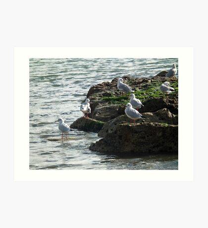 Gulls Rock  Okay Art Print