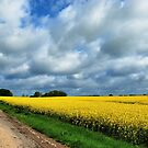 Continuing along the colza fields by jchanders