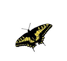 Black And Yellow Butterfly by kwg2200
