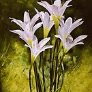 Lilies and Light by Kate Eller