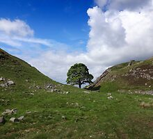 Sycamore Gap - Hadrian's Wall by peely20