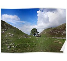Sycamore Gap - Hadrian's Wall Poster