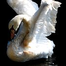 The Swan  by JackieSmith
