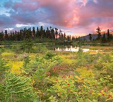 Early autumn meadow by Eti Reid