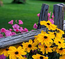 Flowers on the Fence by printscapes