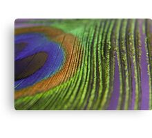 Peacock Feather 2/2 Canvas Print