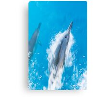 Spinner Dolphins Gliding through Hawaiian Waters Canvas Print