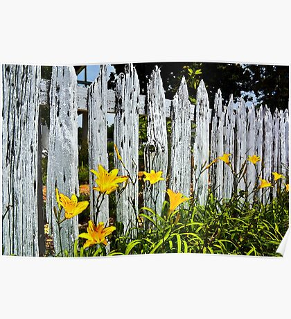 Wood Fence And Daffodils Poster