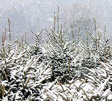 Winter  by JD-Designs