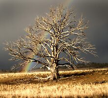 Rainbow and dead tree by DBigwood
