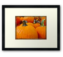 Hiding in the Pumpkin Patch Framed Print