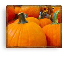 Hiding in the Pumpkin Patch Canvas Print