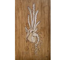 Asparagus Heart Photographic Print