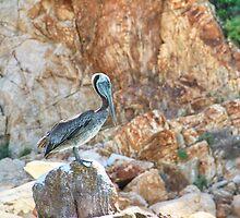 Lonely wild brown pelican HDR by Eti Reid