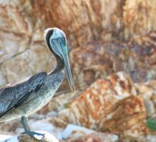 Lonely wild brown pelican HDR Sticker