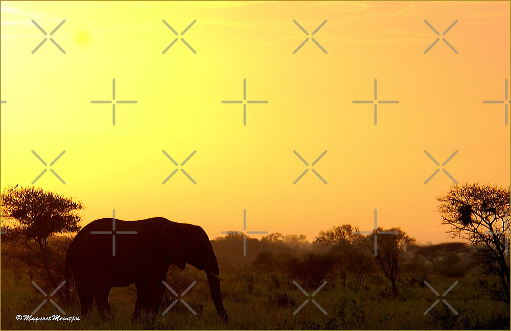 A KRUGER SUNSET - AFRICA - SOUTH AFRICA by Magriet Meintjes
