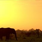 A KRUGER SUNSET - AFRICA - SOUTH AFRICA by Magaret Meintjes