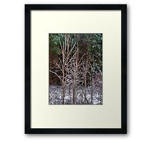The Little Tree Framed Print