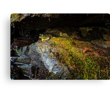 Nearly Invisible Canvas Print