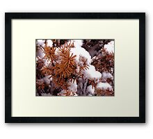 Snow Flower Framed Print