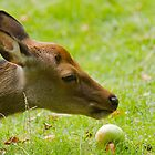 Laying Deer and an Apple by Per Bjarne Pedersen