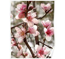 Springtime Blossom Poster