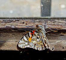 Dead Butterfly by sedge808