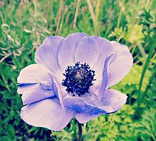 Dublin Anemone by emiliewho