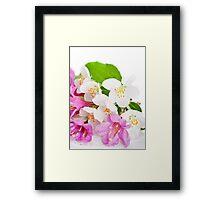 Spring card Framed Print