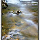 Simple Pleasures, Liffey Falls TAS by Chris Munn