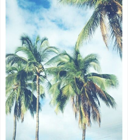 Palm Trees 2 Sticker