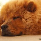 Chow chow dog by akiGR