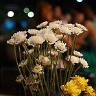 Flowers  by akiGR