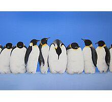 P-P-P-Penguin Line Photographic Print