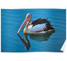 Gliding Pelican - Yamba Poster