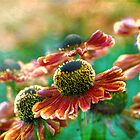 dancing helenium by Teresa Pople