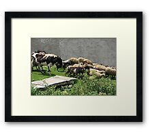 Herding Cows Sheep and Goats Framed Print