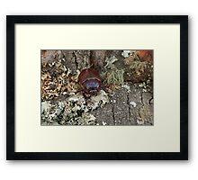 Female Rhinoceros Beetle on Log Framed Print
