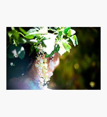 Garden Nymph Photographic Print