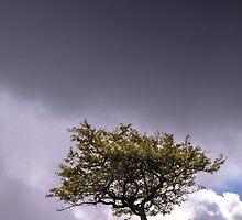 Lone Tree by Heidi Stewart