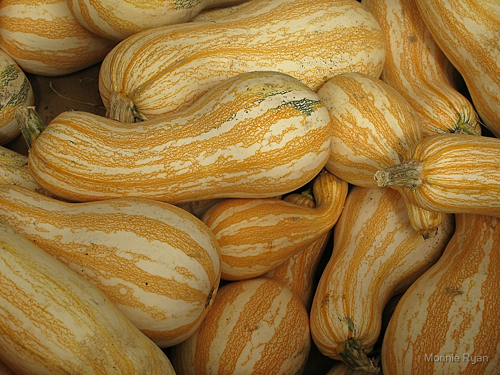 Cucurbita Argyrosperma by Monnie Ryan