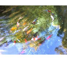 Fishy sky Photographic Print