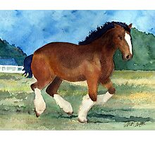 Clydesdale Draft Horse Photographic Print