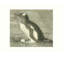 Penguin drawing Art Print