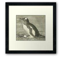 Penguin drawing Framed Print