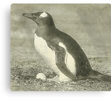 Penguin drawing Canvas Print
