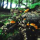 Wild Funghi by JamesTH